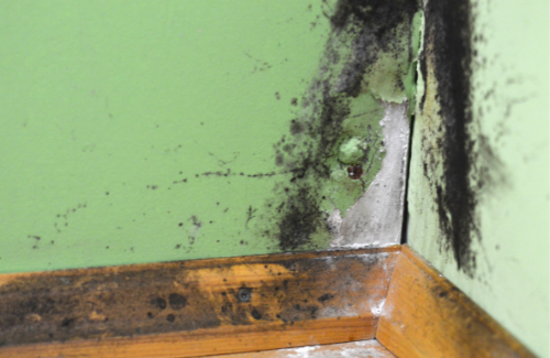 Excel Group Mould Damage Services